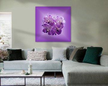 Orchideeën op purper achtergrond. von Wunigards Photography
