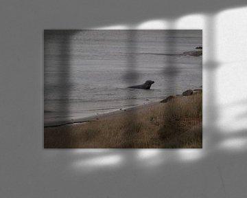 Zeehond in haven von Rinke Velds