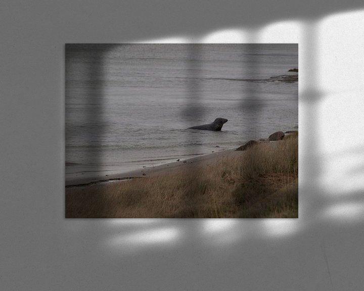 Beispiel: Zeehond in haven von Rinke Velds