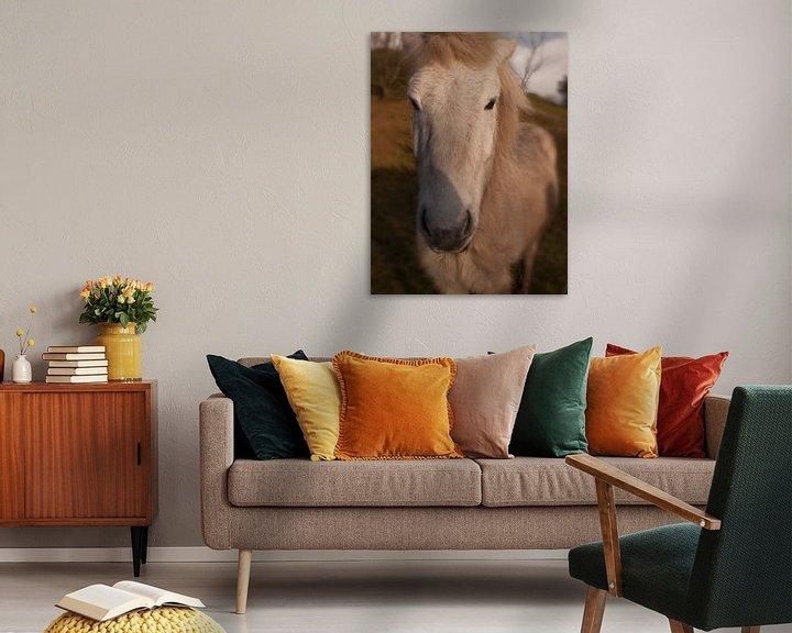 Beispiel: IJslands paard von Rinke Velds