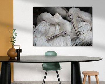 Pelikane von Fraukje Vonk