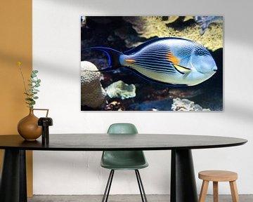 Tropische Vis von Michel Groen