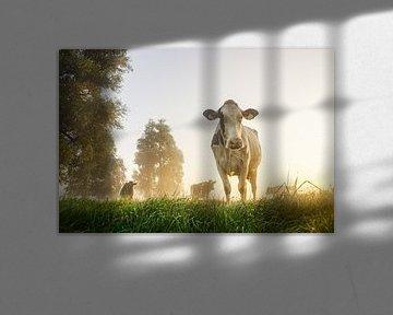 Koe in de wei op een mistige ochtend van Dirk van Egmond