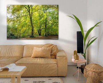 Beukenbomen in een bos in herfstkleuren  van Henk van den Brink