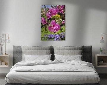 Lavatera-Blüten von Corinne Welp