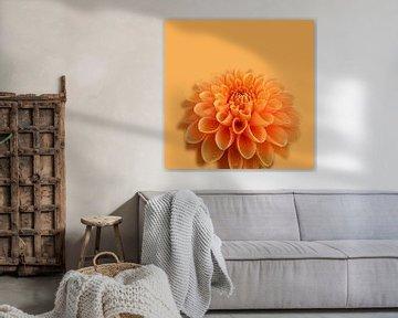 Orange Dahlie von Willeke Vrij