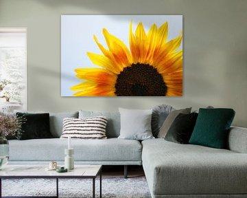tweekleurige zonnebloem von Angelique Nijssen