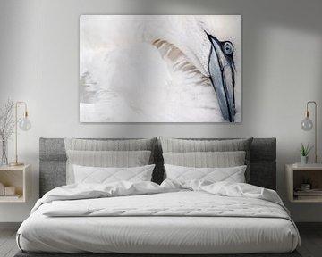 Gannet bird/Jan van Gent sur Rick Ermstrang