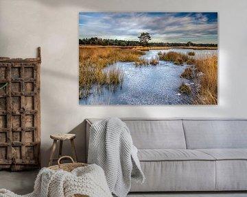 Bevroren Langven op de Sonse Heide, Nederland van H Verdurmen