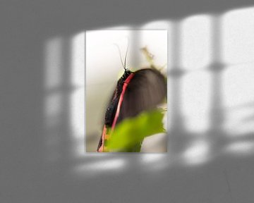 Vlinder rood zwart von Jelte Bosma