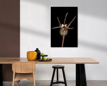 Upcycled Beauty - Bolderik - Agrostemma githago - von Christophe Fruyt