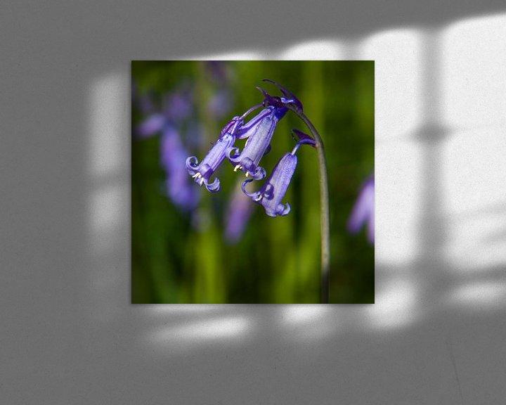 Sfeerimpressie: blue wood hyacinth van Koen Ceusters