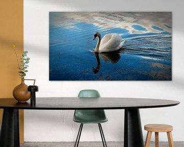 Zwaan 2 Swan van Malec Gebrek
