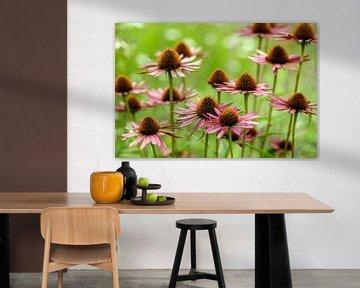 Echinacea (Zonnehoed) van noeky1980 photography