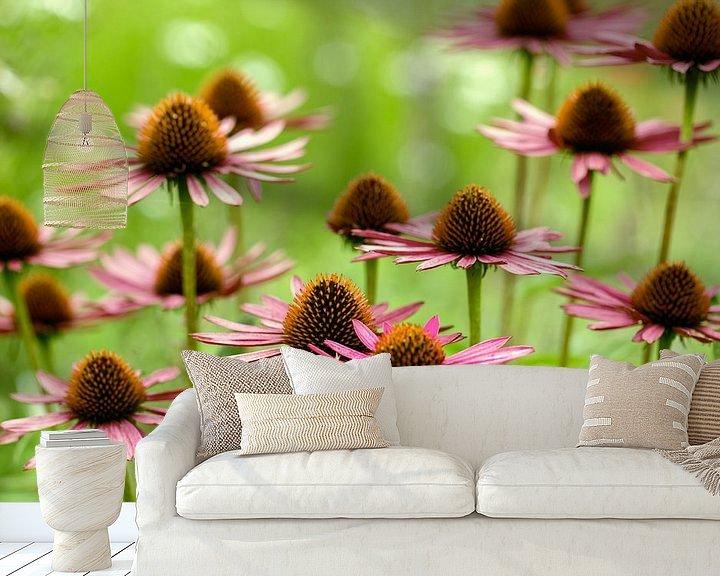 Beispiel fototapete: Echinacea flower von noeky1980 photography