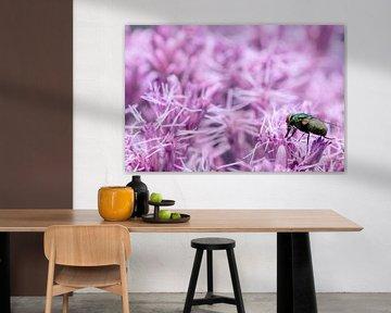 Vlieg op paars/roze bloemenpracht van noeky1980 photography