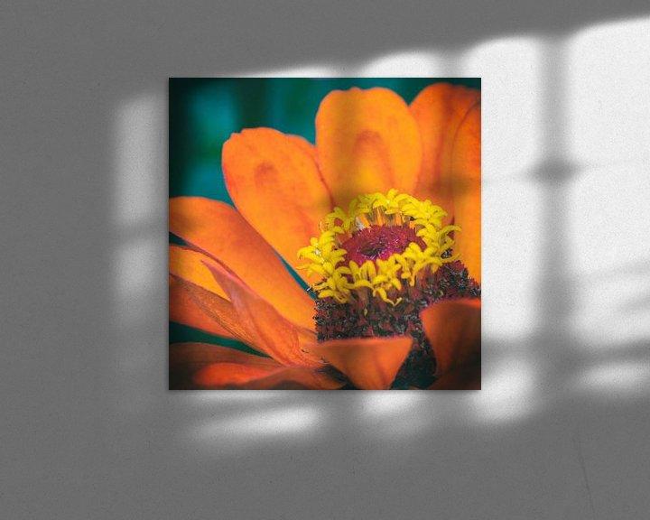 Sfeerimpressie: Macro van een oranje bloem van noeky1980 photography