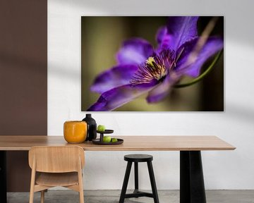 Pretty Purple von Jelte Bosma