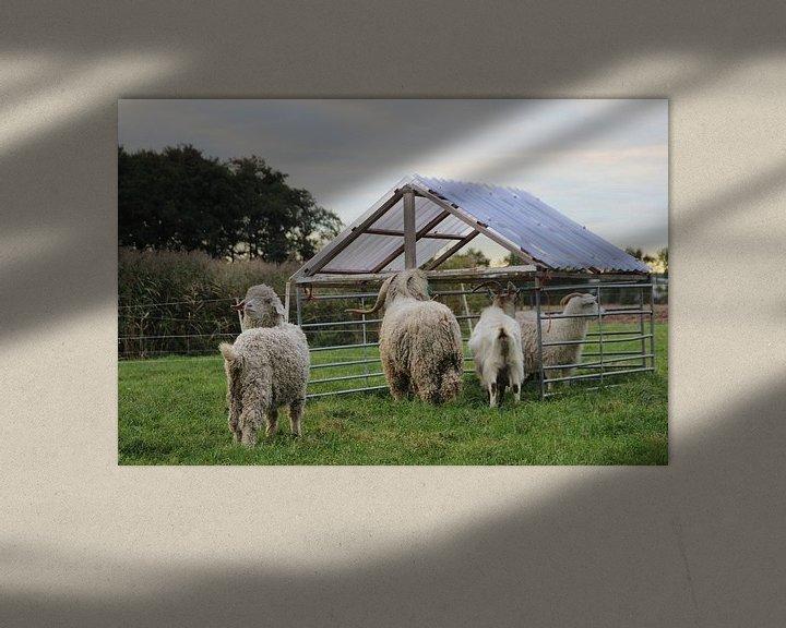 Sfeerimpressie: Geiten en schapen van Jasper van Dijken