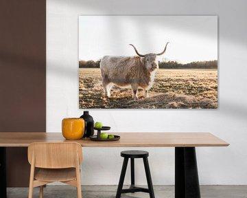 Stier in gouden licht  sur Rob Veldman