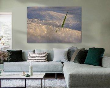 Gras en sneeuw van An Ritchie