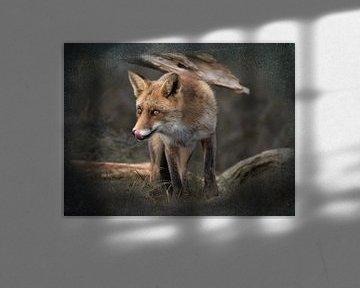 Likkebarende vos