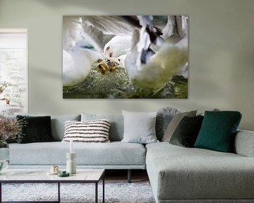 Fish fight - 1 von Erik van Rosmalen