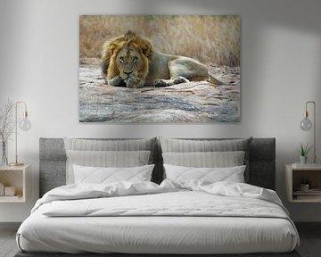Leeuw von John van Weenen