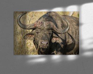 Buffel sur John van Weenen