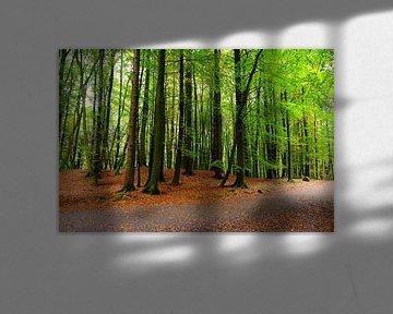 Maigrün von Ostsee Bilder