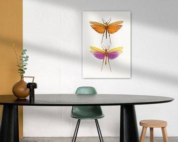 Rariteitenkabinet_Insecten_01