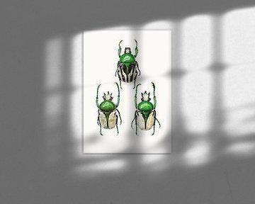Rariteitenkabinet_Insecten_04 von Marielle Leenders