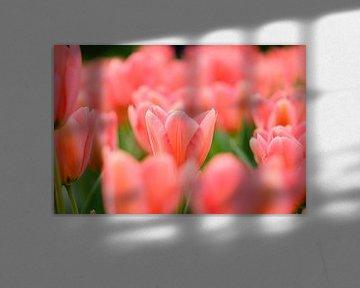 Roze tulpen von Martin Stevens
