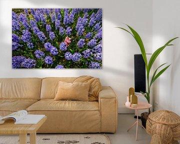 Blauwe hyacinten met een roze verstekeling sur Martin Stevens