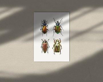 Rariteitenkabinet_Insecten_09 sur Marielle Leenders