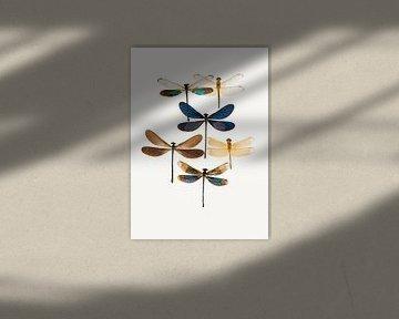 Rariteitenkabinet_Insecten_10 van Marielle Leenders