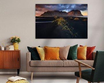 Stokksnes, IJsland von Sven Broeckx