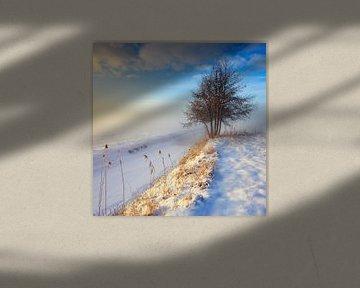 Mistig winterlandschap met boom tijdens zonsondergang van Peter Bolman
