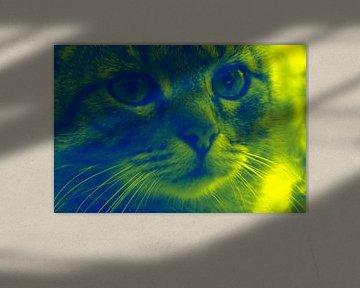 Katze in Bunt von Andrea Meister