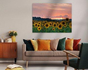 Sonnenblumen Sonnenuntergang von Judith Borremans