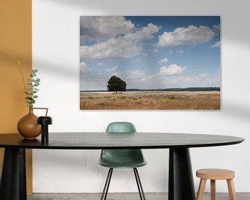 Eenzame boom van Marco Nedermeijer