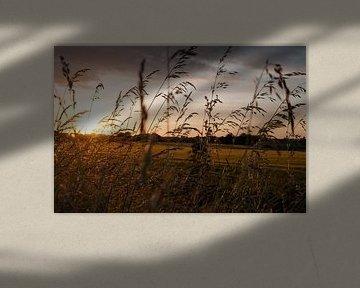 Ondergaande zon van Lieke Roodbol