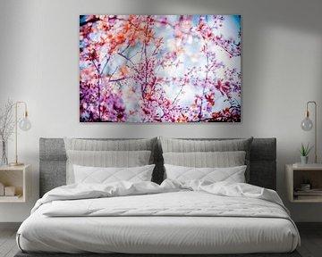roze bloesem aan boom met blauwe lucht van Margriet Hulsker