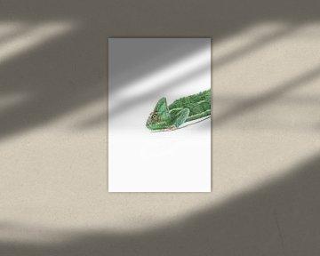 Kameleon in het groen von Celina Dorrestein