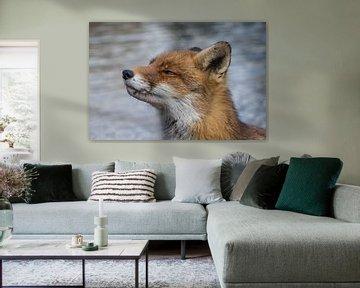 Nieuwsgierige vos von Yvonne van der Meij