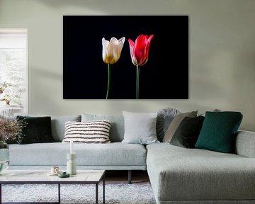 Hollandse tulpen von Celina Dorrestein