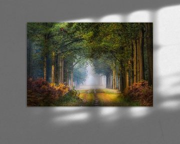 Het pad von Jos Erkamp