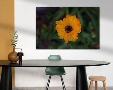 Bright flower van Bas Dijk