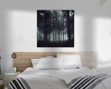 Dunkellheit und Licht - Nadelwald im Nebel von Dirk Wüstenhagen
