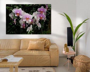 Orchidee von Kuba Bartyński